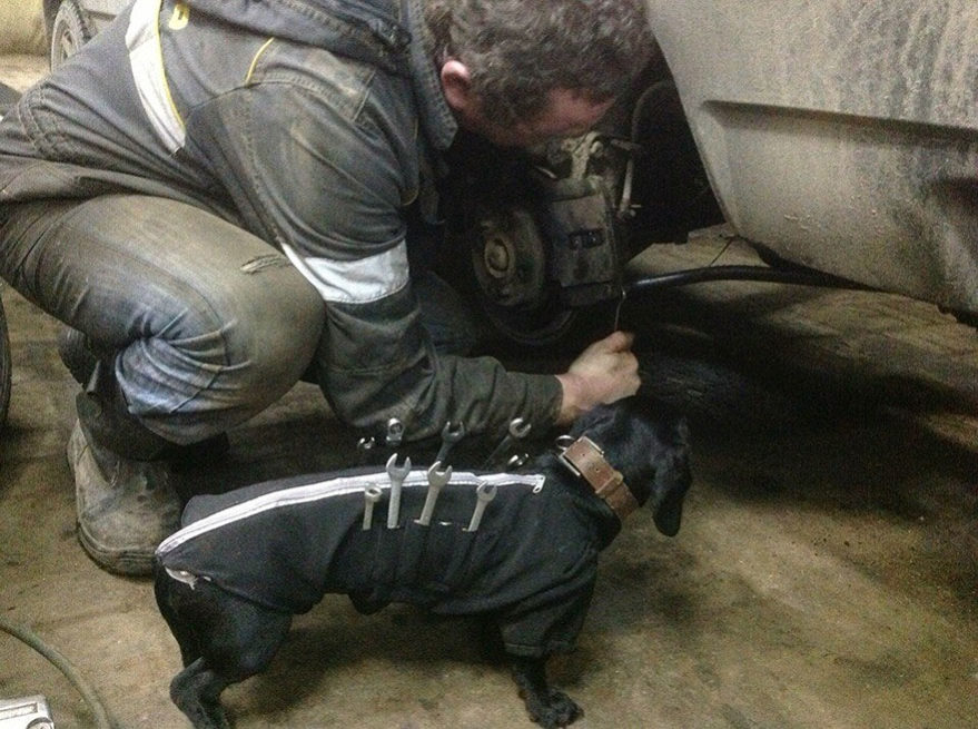 Pes automechanik