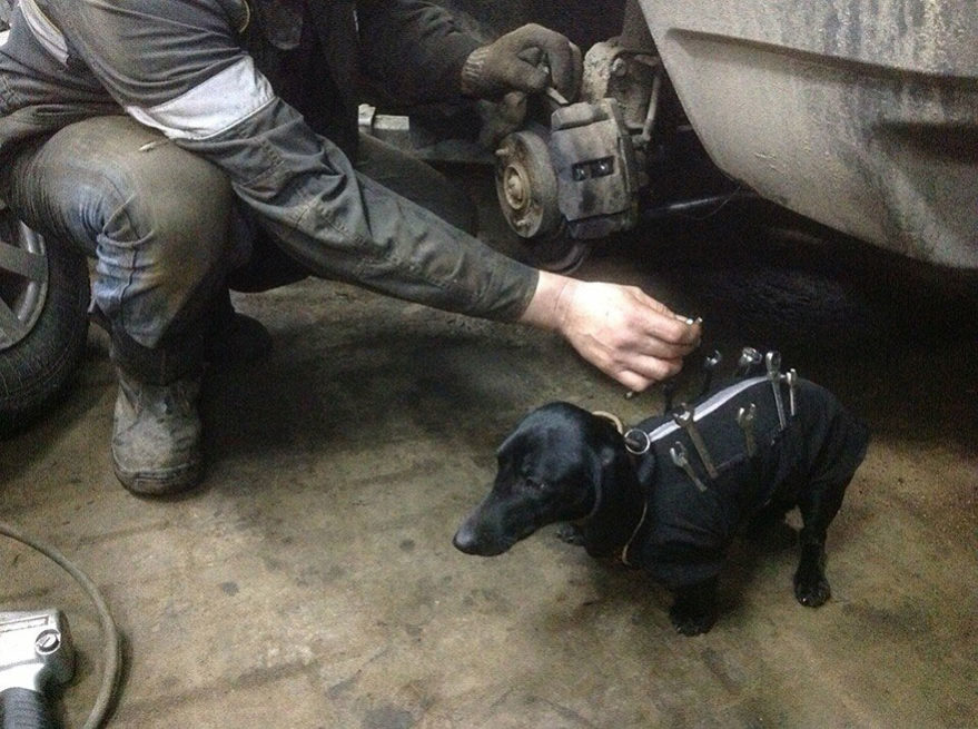 Pes - pomocník v autoservisu