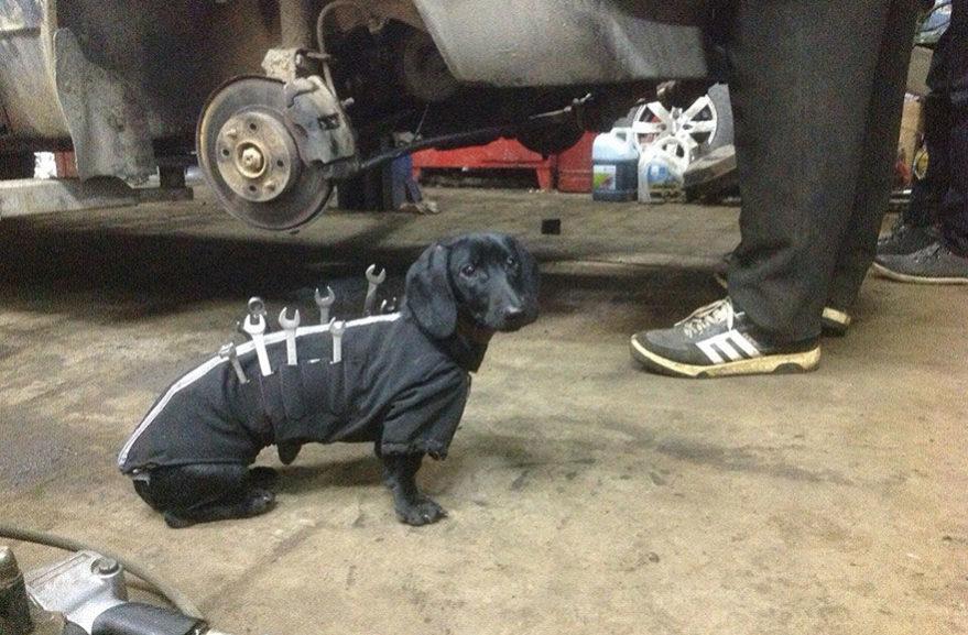Pes v autoservisu
